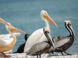 Charlotte Harbor Aquatic Preserves Nature Boat Tour Ecotour