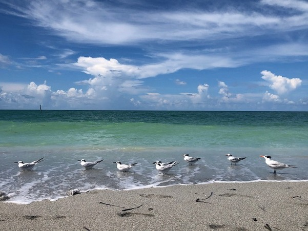 Birds standing in shallow beach water